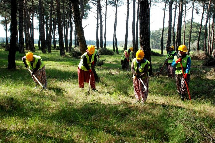 Typ orman işçisi olma