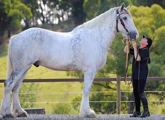 at biniciliği hobisi