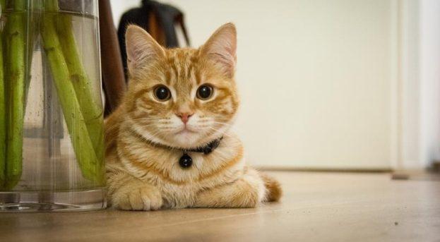 Evde Kedi Bakımı | Kedier