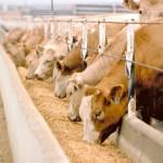 Devlet desteği ile çiftlik kurmak