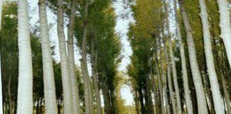 Ağaç dikerek satmak