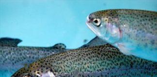 Balık çiftliği kurma