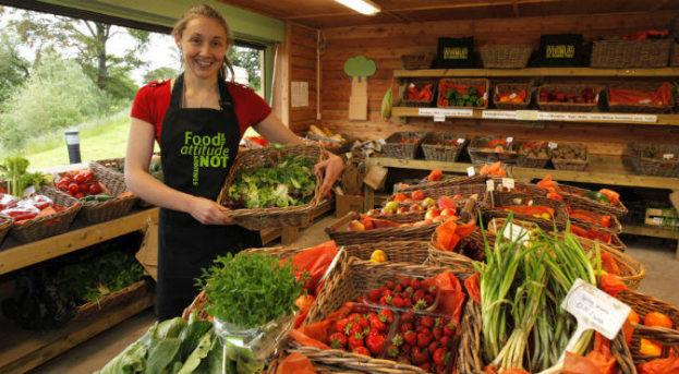 Köy Ürünleri Satarak Para Kazanmak   Organik Gıdalar Satmak