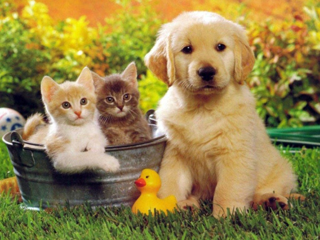 Evcil hayvan yetiştirim satma iş fikri