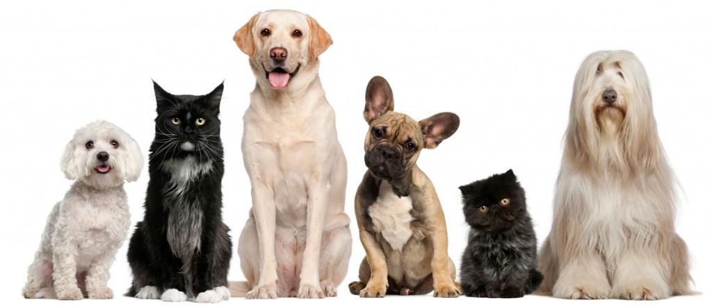Evcil hayvan satma iş fikri