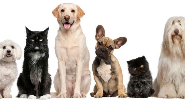 Evcil Hayvan Üretimi Yaparak Paza Kazanın