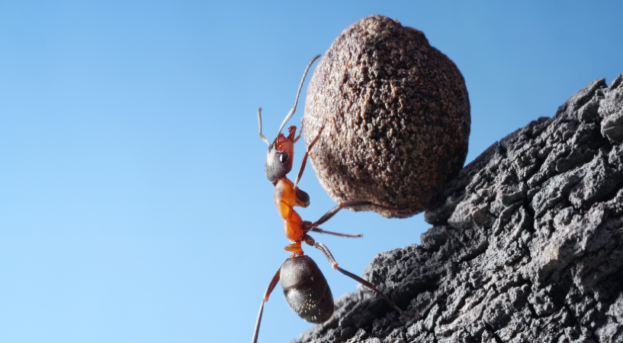 Sıkı Çalışma Başarıyı Garantiler Mi? | Başarılı Olmak İçin…