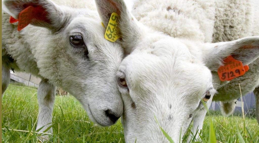 Hayvancılık Yapmak Para Kazandırır Mı Karlı Mıdır Piyasa Anketi