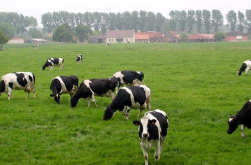Çiftlik arazisi yasal prosedürü